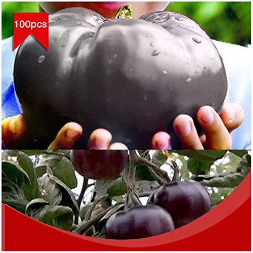 Portal Cool 100pcs / bolsa de carne de vaca gigante Negro híbridos de tomate Semillas orgánicos de la herencia del jardín del tomate