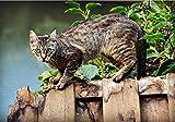 JFZJFZ Pintura por números para adultos y niños Kits de regalo de pintura al óleo DIY Plantas Paisaje Mar Gato Animal Caballa Felino Mascota 40x50cm