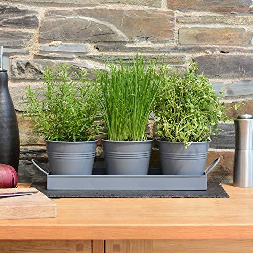 CKB Ltd Pflanztöpfe für Kräuter, Metall, mit Abtropfschale, traditioneller Fensterbank, für die Küche, zum Anpflanzen Ihrer eigenen Kräuter zum Kochen, Anthrazit, 3 Stück