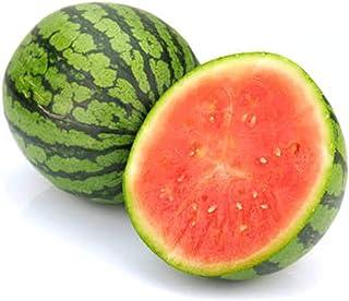 「赤小玉スイカ(品種:ひとりじめ7)接木苗」【野菜 接木苗9cmポット/8個セット】糖度は13~14度以上で特に高く、素晴らしく風味のある食味が特徴!!草勢は中~やや強で、雌花の着生や花粉の出がすこぶる良く、着果性に優れる。果実は果皮色濃く、2...