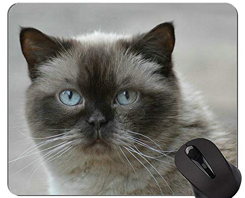 Yanteng Alfombrillas de ratón, Alfombrilla de ratón para Juegos de Gato Persa de Pelo Corto exótico, Alfombrilla de ratón con Borde Cosido