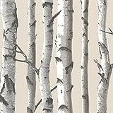 Chesapeake TLL21499 Tuxbury Birch Tree Wallpaper, Beige