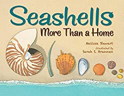 Seashells: More Than a Home by Melissa Stewart, illustrated by Sarah S. Brannen