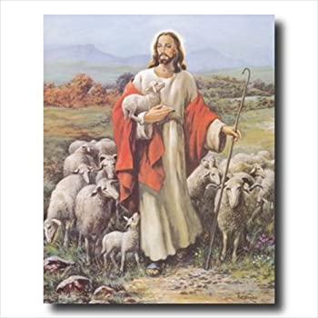 Best baby lamb picture Reviews