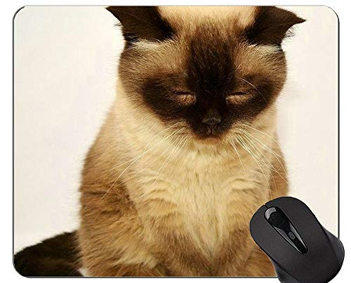 Alfombrillas de ratón, British Shorthair Cat Alfombrilla de ratón Young Young Cat con Borde de Bloqueo, Alfombrilla de ratón British Shorthair con Borde Cosido