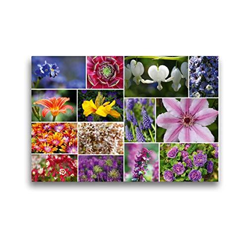 Premium Textil-Leinwand 45 x 30 cm Quer-Format Staudenblumen Collage | Wandbild, HD-Bild auf Keilrahmen, Fertigbild auf hochwertigem Vlies, Leinwanddruck von Martina Cross