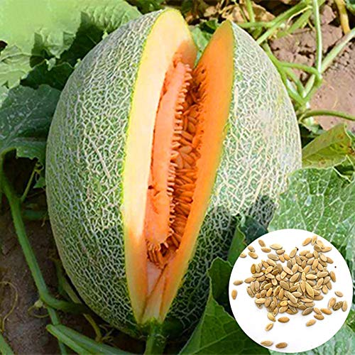 Semillas de melón cantaloupe, 1 bolsa de semillas dulce germen jugoso semillas de frutas naturales de la huerta
