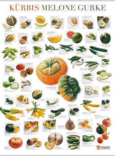 Kürbis, Gurke und Melone (Poster)