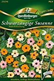 Schwarzäugige Susanne, Pastell Selektion