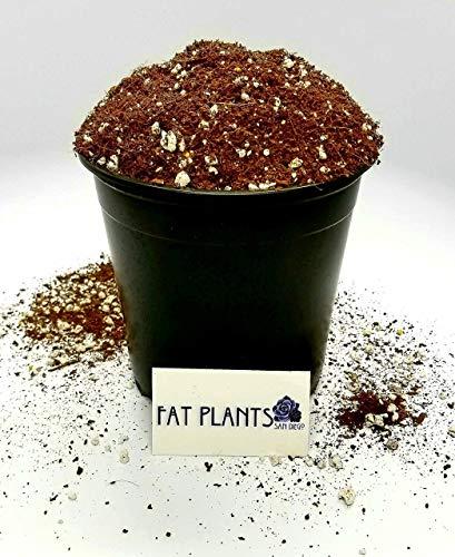 Fat Plants San Diego Premium Succulent Soil