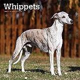Whippets - Kleine Englische Windhunde 2020 - 16-Monatskalender mit freier DogDays-App: Original BrownTrout-Kalender [Mehrsprachig] [Kalender] (Wall-Kalender)