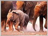 1art1 Elefantes Póster Impresión Artística con Marco (Plástico) - Rebaño De Elefantes, Namibia (80 x 60cm)