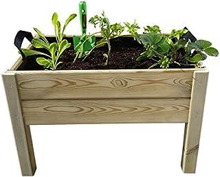 Amazon.es: Los niños - Plantas, semillas y bulbos: Jardín