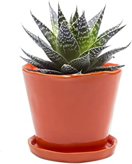 Chive - 5 Inch Big Tika, Large Succulent and Cactus Pot and Saucer Ceramic Flower and Plant Container with Drainage Hole and Detachable Saucer Great for Indoor/Outdoor Garden Decor (Orange)