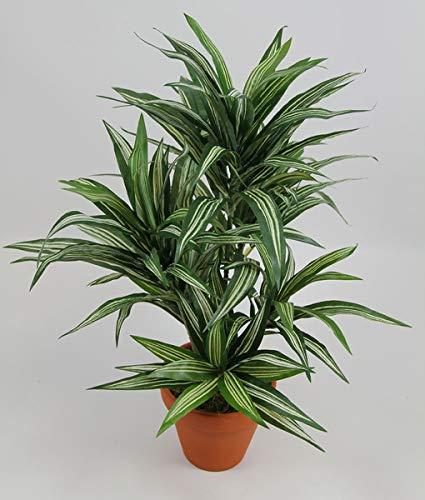 Seidenblumen Roß Dracena 42cm grün-gelb im Topf DA Drachenbaum Kunstpalmen Dekoapalme Kunstpflanzen künstliche Pflanzen Palmen