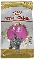 British shorthair Kitten Dry food