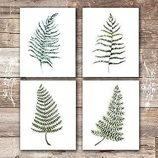 Fern Wall Art - Botanical Prints - (Set of 4) - Unframed - 8x10s