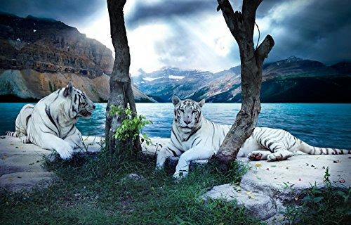 Bilderdepot24 Vlies Fototapete - Tiger II - 230x150 cm - mit Kleister – Poster – Foto auf Tapete – Wandbild – Wandtapete – Vliestapete