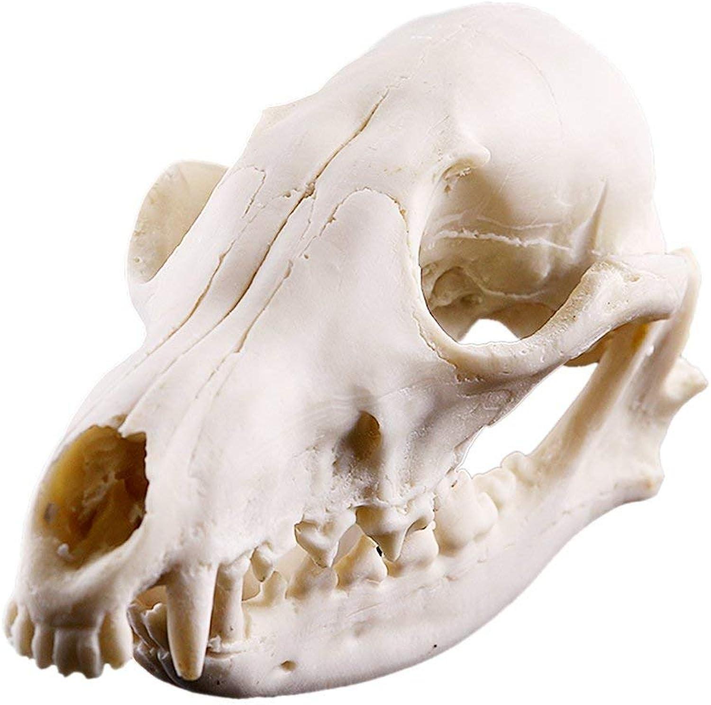 Fuchs Schädel Schädel Schädel Figur Harz Skelett Modell für Lehre Sammler Aquarium Dekor B07L825ZT9 | Neuheit Spielzeug  8e4274