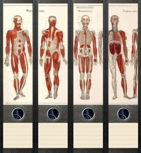 Ordnerrücken breit 4er Set Ordner Anatomie Skelett Aufkleber Etiketten Deko 034