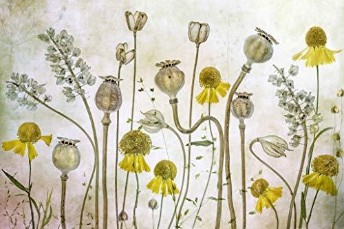 Kunst für Alle Impresión artística/Póster: Mandy Disher Poppies and Helenium - Impresión, Foto, póster artístico, 100x65 cm