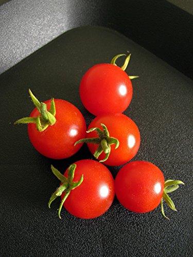 Hellrote Cocktailtomate \'Zuckertraube\' (Solanum lycopersicum) Bio 20 Samen