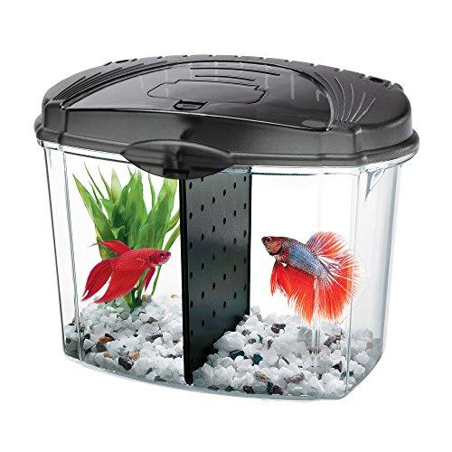 Best Fish Aquarium Store