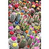 DIY Diamond Painting Full Drill Completo Kit tamaño grande Cactus de flor de color 80x220cm Diamante Arte Bordado 5D DIY Pintura de Diamante punto de cruz Mosaico Imagen Regalo Decoracion Pared