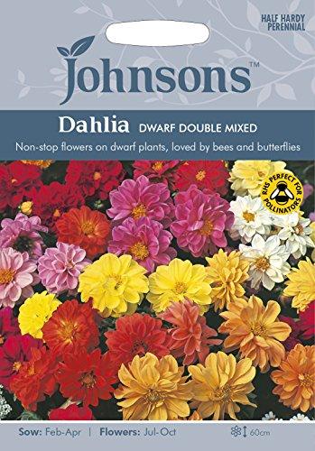 Johnsons 22568 Flower Seeds, Dahlia Dwarf Double Mixed