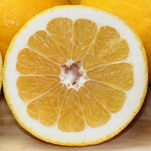 「ファミリーナダオレンジ5」皮むき簡単食べ易い冷やして食べるとひんやりジューシー(河内晩柑,かわちばんかん) フルーツ 果物 通販 5kg