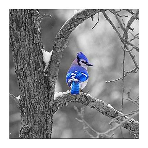 5D Pintura de Diamantes niños Adultos por Numero kits Pájaro azul Bordado de Diamante Art Craft de cruz Punto lienzo Picture Manualidades para Decoración de Pared(80x80cm/32x32in)Round Drill