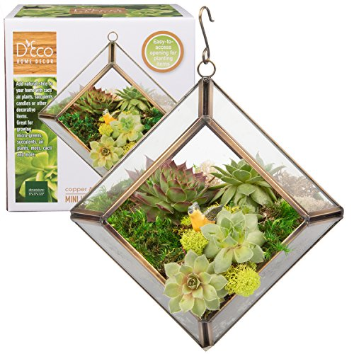 Glass Geometric Terrarium, Succulent & Air Plant- Diamond Mini (5 x 5 x 3.5 in)