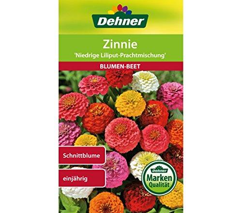 Dehner Blumen-Saatgut, Zinnie