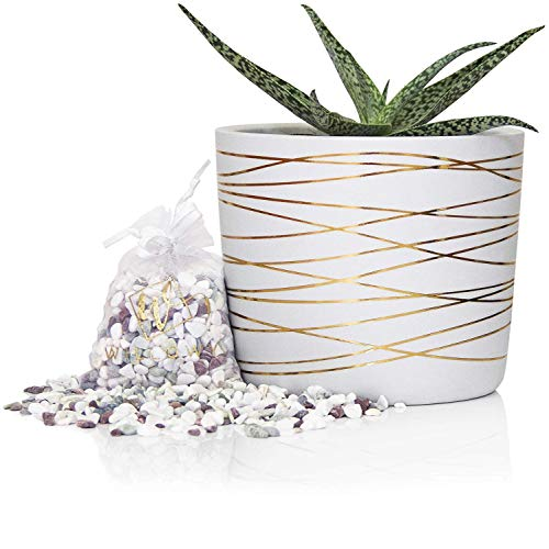 6 Inch Ceramic Plant Pot - Small White Planter with Gold Stripes - Perfect for Succulents - Decorative Pebbles Included - Cute Flower Pots - Indoor or Outdoor Home Decor