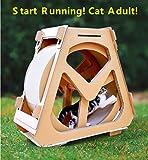 DIOPN Katze Rad Neue Haustier Spielzeug wellpappe Katze Klettern wassertank lustige katzenspielzeug...