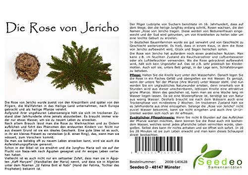 Seedeo® Rose von Jericho (Selaginella lepydophylla) 1 Stück