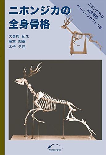 ニホンジカの全身骨格の詳細を見る