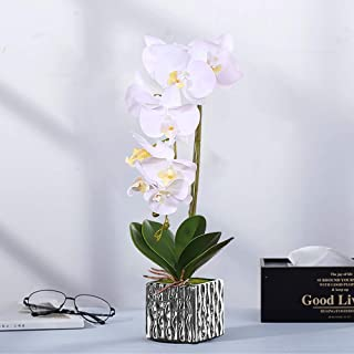 Mejor Plantas De Maceta Con Flores