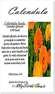 Big Pack - Calendula Flower Seeds (4,500 Seeds) - Calendula officinalis Pacific Beauty Mix - Edible Flower Seeds by MySeeds.Co (Big Pack - Calendula Mix)