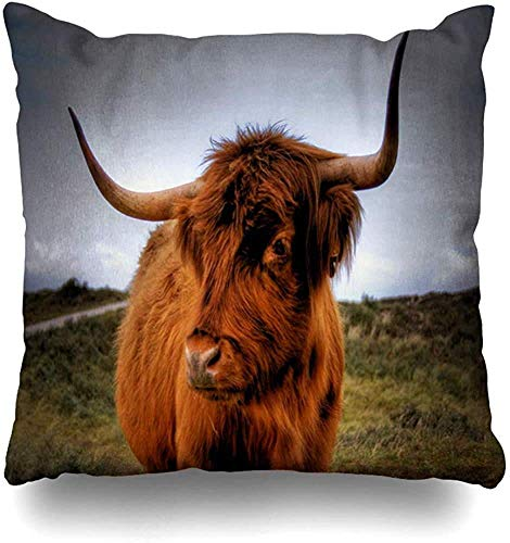 N / A Square Cushion Case,Throw Cushion Cover,Sofa Pillowslip,Home Decor Pillowcase,Red Cow Scottish Highlander Wildlife Scotland Culture Nature Brown Bull Angus Highland Beef Cattle Car Pillow Case