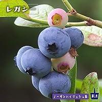 ブルーベリー 苗 レガシー ノーザンハイブッシュ系2年生苗 ブルーベリー苗 blueberry
