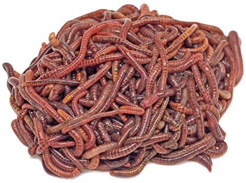 DaWurmbauer Kompostwürmer kaufen - 250 Stück + 1 Beutel Wurmstarterfutter - Regenwürmer Würmer lebend Futterwürmer Gartenwürmer Wurmhumus Angelwürmer Mistwürmer…