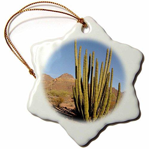 3dRose Arizona, Organ Pipe Cactus NM. Organ Pipe Cactus - Snowflake Ornament, 3-inch (orn_229714_1)