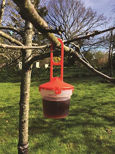 Agralan Lot de 400 pièges à aile de drosophile à pois pour protéger les cultures de fruits et de cerises