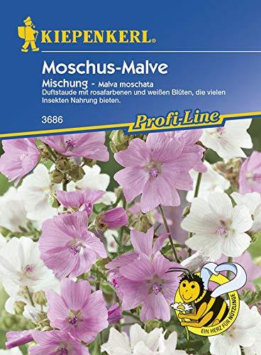 Moschus-Malve 'Mix' von Kiepenkerl