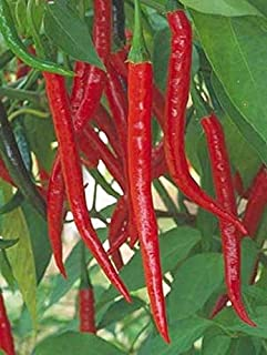 Kung Pao Asian Pepper Seeds (25 Seeds)