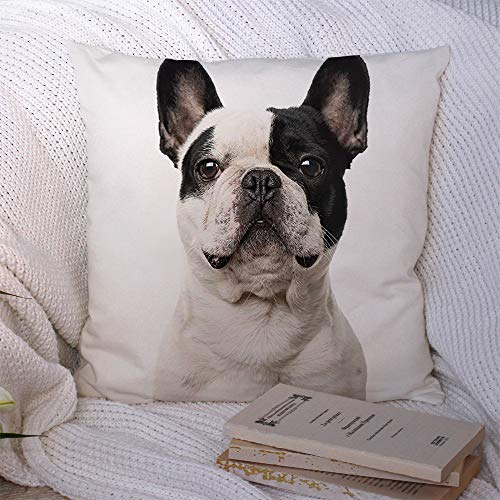 Decorative Pillowcase Closeup French Bulldog Nobody Looking Camera Animals White Wildlife Dog Head People Pet On Black Throw Pillow Cover Soft Square Cushion Case for Bed Couch Car 16x16 Inch