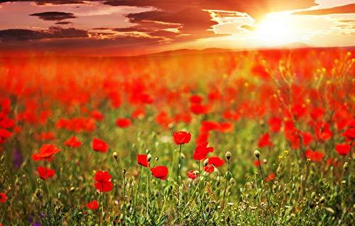 Bilderdepot24 Fototapete selbstklebend Mohnfeld - 155x100 cm - Wandposter Tapete Motivtapete - Natur Landschaft mit Mohnblumen