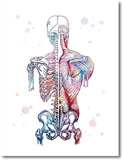 XIANRENGE Impression HD Poster Imprimé sur Toile,Aquarelle Anatomie Squelette Humain Moderne Toile Art Mural Grand Pop Jet...