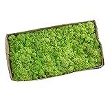 perfeclan Musgo Secado Flor Seca Preservada Decor - Fruta Verde